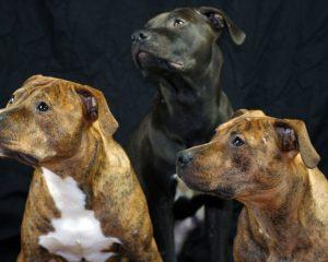 hundefotos richtig machen